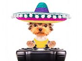 image of mexican-dog  - cute puppy dog wearing a mexican hat play on game pad isolated - JPG