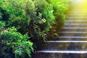 picture of stepping stones  - Stone steps in garden - JPG