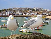 pic of st ives  - Seagulls in St Ives harbour Cornwall England UK - JPG