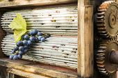 stock photo of crusher  - Manual grape crusher with grinding aluminum cylinders holding a grape with a leaf - JPG