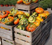 stock photo of turban  - Turban squash gourds large and variegated in orange and green color are displayed for sale in large wooden crates at a farm in autumn - JPG