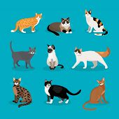 stock photo of blue tabby  - Set of vector cats depicting different breeds and fur color standing  sitting and walking on a blue background - JPG