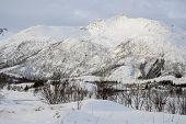 stock photo of lofoten  - Mountain At Winter In Svolvaer - JPG