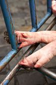image of slaughterhouse  - Pork feets on a cart in a slaughterhouse - JPG