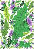 pic of scottish thistle  - vector image beautiful decorative border of thistle flowers - JPG