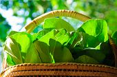 stock photo of food plant  - a plant or part of a plant used as food typically as accompaniment to meat or fish such as a cabbage potato carrot or bean. ** Note: Soft Focus at 100%, best at smaller sizes - JPG
