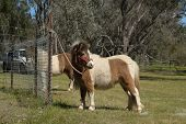 pic of pony  - 2 tiny pony - JPG