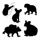 stock photo of koala  - Koala set of silhouettes vector - JPG