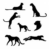 foto of animal silhouette  - Cheetah set of black silhouettes - JPG