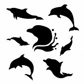 pic of animal silhouette  - Dolphin set of black silhouettes - JPG