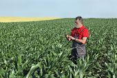 image of inspection  - Farmer inspect quality of corn using phone or tablet - JPG