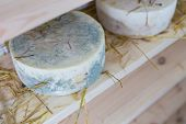 picture of basement  - Goat cheese maturing in basement - JPG