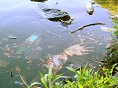 picture of water pollution  - trash floating in the charles river basin in boston - JPG