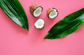 Tropical Composition With Coconut. Whole Coconuts And Coconut Cut In Half Near Pulm Leaves On Pink B poster
