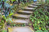 Image Of Up Stair Footpath In The Garden. poster