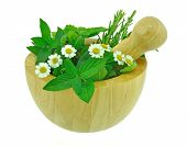image of feverfew  - Fresh garden herbs and feverfew plant with wooden pestle and mortar - JPG