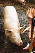 Pigs On The Farm. Happy Pigs On Pig Farm With Girl. Piglets poster