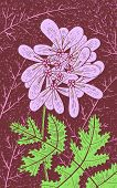 Coriander - Floral Illustration. Colorful Plant Drawing. Graphic Psychedelic Multicolored Line Art.  poster