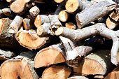 Background of dry chopped firewood logs in a pile  poster
