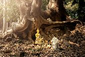 Buddhism Statue At The Root Of A Tree With Dry Leaves Covered The Ground And The Ancient Ruined Wat  poster