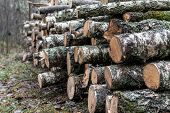 A Pile Of Cut Wood Near The Forest. Concept Of Forest Felling, Wood Problem, Ecology. poster