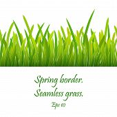 Seamless Pattern Of Green Grass. Green Grass Border . Realistic Green Grass Design , Eco Nature Gree poster