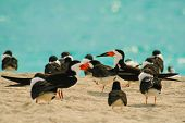 foto of flock seagulls  - Flock of seagulls on the beach Miami Miami - JPG
