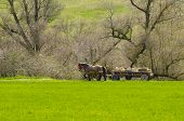 pic of chariot  - Old rustic chariot in forest in summer day - JPG