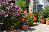 image of sissi  - Plant pots with flowers and an oleander in Greece in Sissi on Crete - JPG