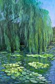 picture of weeping willow tree  - A pond reflects a weeping willow tree and water lilies - JPG