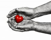stock photo of empathy  - elderly woman keeping red heart in her palms isolated on white background symbol of care and love - JPG