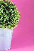 foto of planters  - Image of tinny planter with flower on pink background - JPG
