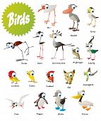 image of nightingale  - Vector birds set - JPG
