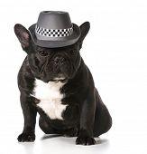 stock photo of fedora  - cute french bulldog wearing fedora - JPG