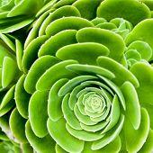 pic of century plant  - succulent plant closeup - JPG
