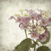 stock photo of lantana  - textured old paper background with pink and yellow Lantana flowers - JPG