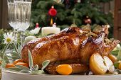 image of roast duck  - Citrus glazed roasted duck stuffed with rice garnished with apples kumquats and sage - JPG