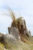 stock photo of driftwood  - Driftwood and beach grass at Bullards Beach State Park near Bandon Oregon - JPG