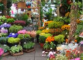 picture of flower shop  - variety of flowers at a flower market in Amsterdam - JPG