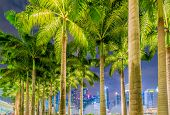 stock photo of singapore night  - Palms in Singapore during night time - JPG
