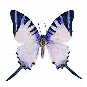 picture of blue butterfly  - Blue butterfly Five Bar Swordtail butterfly  - JPG