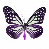 picture of mime  - Purple butterflyTawny Mime butterfly in fancy color profile isolate on white background - JPG