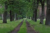 foto of dirt road  - The photograph shows the forest - JPG
