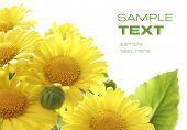 pic of yellow flower  - sunshine flowers - JPG