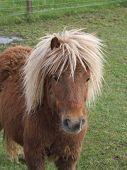 Cute Horse poster