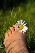 Summer Toes poster