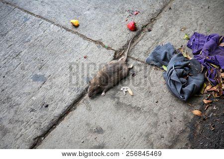 Dead Rat Dead Rat being