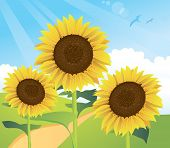 Summer Sunflower Landscape