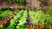 Vegetable Garden In Late Summer. Herbs, Flowers And Vegetables In Backyard Formal Garden. Eco Friend poster