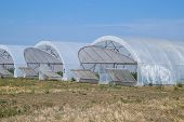 A Group Of Greenhouses For Growing Tomatoes And Cucumbers. Growing Tomatoes In The Greenhouse. Seedl poster